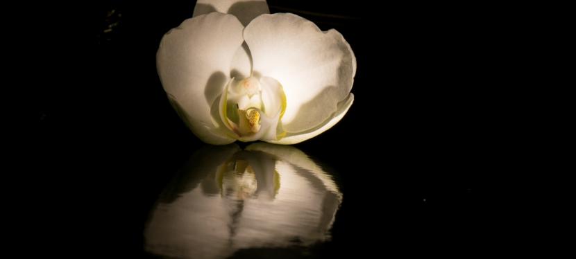 Innere Schönheit