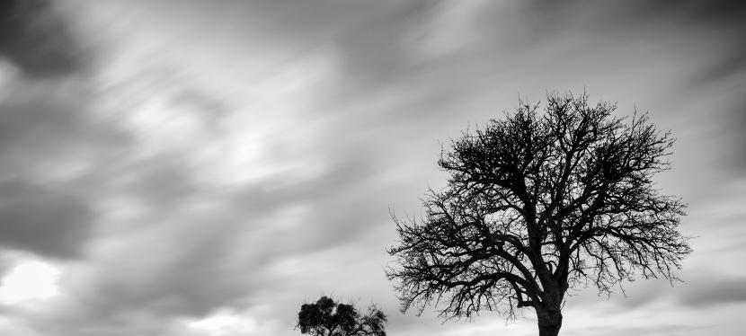 Natur in schwarz/weiss