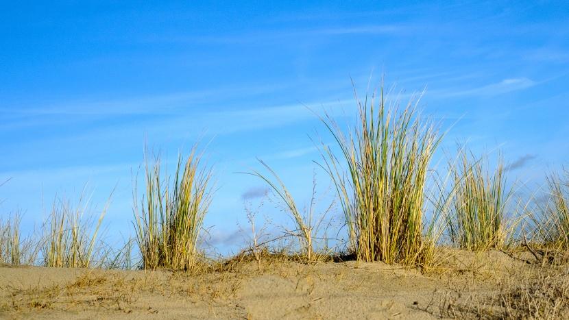 Naturimpressionen Holland