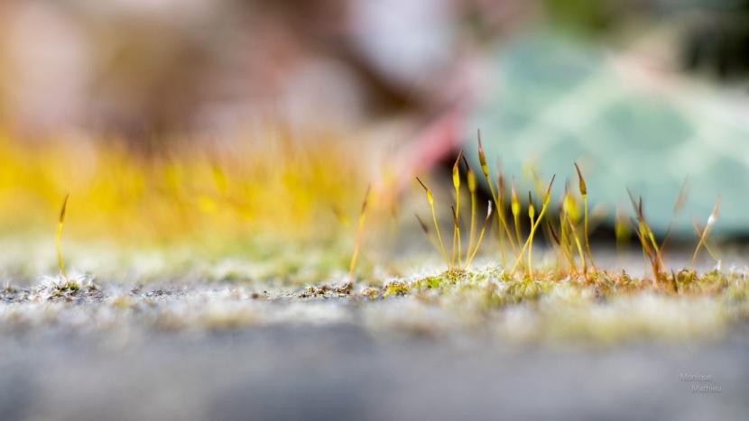Der Zauber im Kleinen (9Fotos)